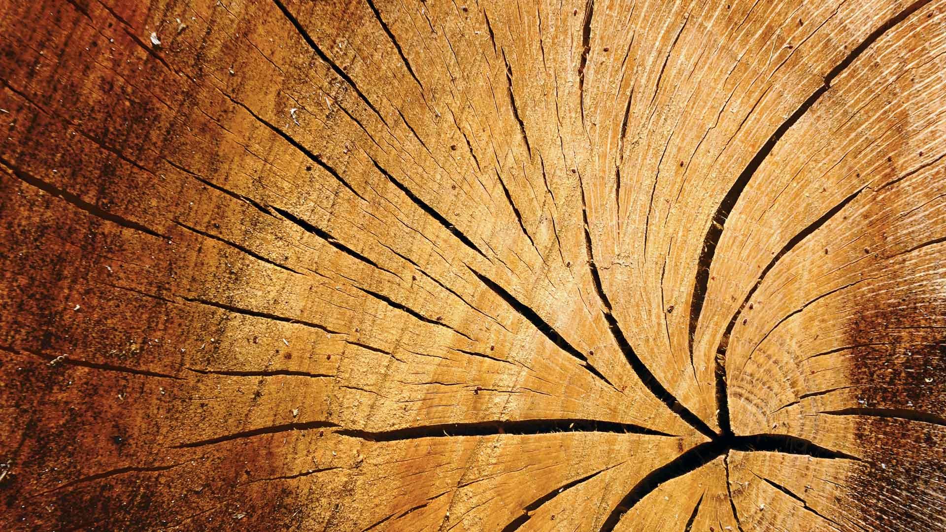 Thomas schaldach bilder news infos aus dem web for Holz wallpaper